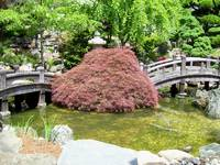Japanese Garden Maple and Bridges