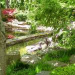 """Japanese Garden Peacock Pond"" by Marysvision"