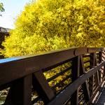 """Bridge to Autumn"" by JosephPlotz"