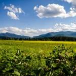 """""""Adirondack Field"""" by JosephPlotz"""