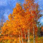"""autumn birch trees"" by bogfl"