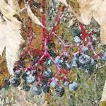 """""""Autumn Blue Berries"""" by Triflour"""