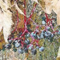 Autumn Blue Berries Art Prints & Posters by Dorotti Triflour