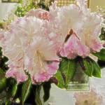 """Flowers Hut 010 Fantasy"" by dawncloudflower"