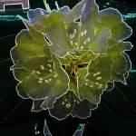 """Flowers Hut 012 Aura A"" by dawncloudflower"