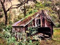~Old Wood Shed~