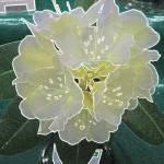 """Flowers Hut 012 Aura B"" by dawncloudflower"
