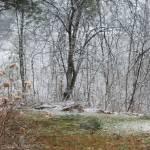 """""""Virgin Snow"""" by shelshots"""