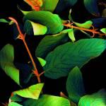 """""""Chromatic Leaves III"""" by LindaCavaney"""