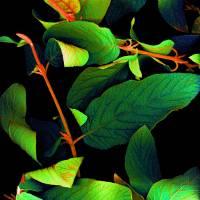 Chromatic Leaves III Art Prints & Posters by Linda Cavaney