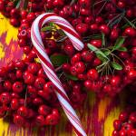 """Candy cane and berries"" by photogarry"
