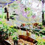 """Flowers Hut 001B Fairytale"" by dawncloudflower"