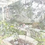 """""""Flowers Hut 001B PencilColour"""" by dawncloudflower"""