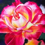 """Rio Samba Rose"" by KellyEddington"