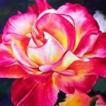 """Rio Samba Rose"" by KellyEddington"