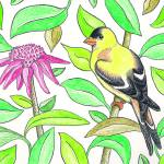 """AmericanGoldfinch_CFKittredge7"" by KittredgeCreative"