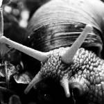 """A snail"" by kavolis"