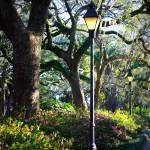 """Forsyth Park Spring Walk"" by Groecar"
