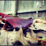 """""""Autumn Leaves"""" by mhoelzer2988"""