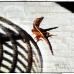 """""""Lizard"""" by mhoelzer2988"""