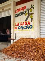 Drying Cacao in Front of Buyer's Store