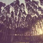 """""""Treeline"""" by iheartafrica"""
