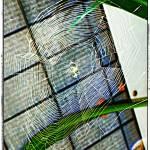 """Spider Web"" by mhoelzer2988"