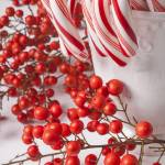 """Candy Canes and Red Berries"" by photogarry"