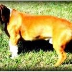 """Dog"" by mhoelzer2988"