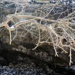 """""""1 Ocean Branch"""" by NaturePlusStudios"""