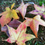 """""""Leaves on the Ground 1"""" by ChristopherInMexico"""