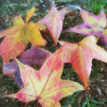 """""""Leaves on the Ground 1 Painterly"""" by ChristopherInMexico"""