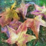 """""""Leaves on the Ground 1 Mystic"""" by ChristopherInMexico"""