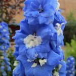 """Blue Glory"" by podspics"