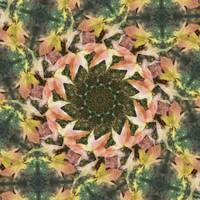 Leaves Memory Kaleidoscope 19