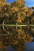 Bidwell Park Reflections