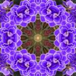 """""""African Violet Mandala"""" by SeaAngel12"""