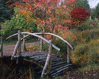 Rustic Bridge in Autumn