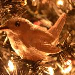 """Christmas Bird"" by WildAboutNaturePhotography"