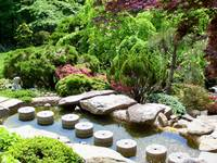 Japanese Garden Stepping Stones and Trees