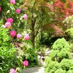 """Japanese Garden  Pink Rhododendron"" by Marysvision"