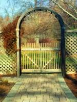 The Birch Wood Beyond the Gate