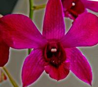 A Delightful Orchid :)