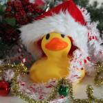 """Jingle Duck"" by JanaSinor"
