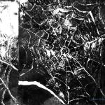 """Abstract Spider Web Print"" by Lenora"