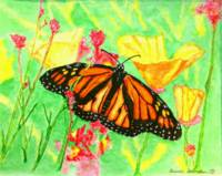 Summer Monarch Butterfly by Brenda Doberstein