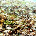 """""""Rainy Autumn Day"""" by mhoelzer2988"""