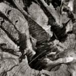 """Tree Stump"" by cherylbucklew"