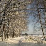 """Dutch winter landscape"" by edmondholland"