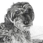 """Schnell - Wire Haired Dachschund"" by Eris-Artwork"